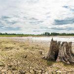 Un tercio de las áreas protegidas del mundo están degradadas