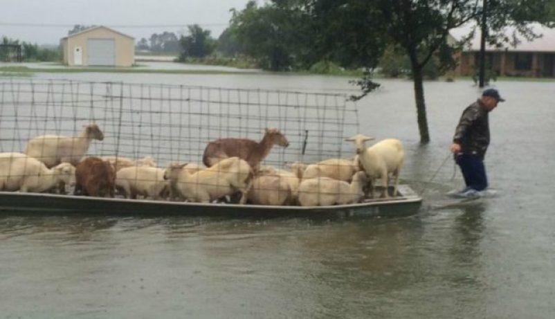 animales, cambio climático, sequías, inundaciones