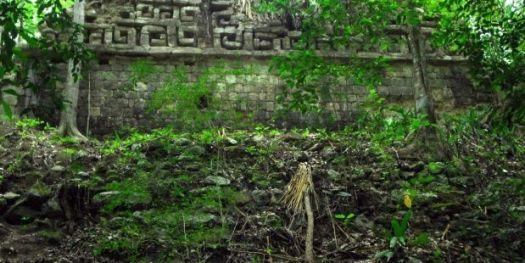 deforestación, carbono, Mayas, biodiversidad, suelo