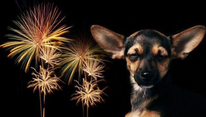 fuegos artificiales, ruido, animales, Navidad, Año Nuevo, luces, mascotas