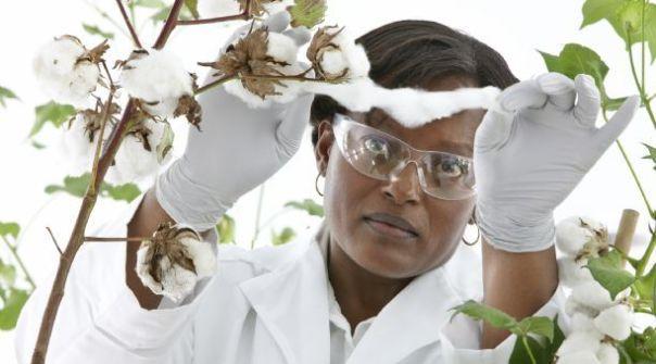Bayer, soberanía alimentaria, cultivos, transgénicos