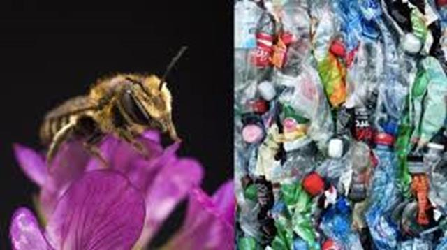 Abejas hacen nidos con plásticos