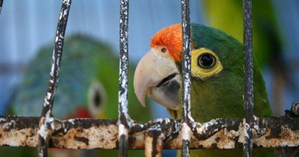 pájaros, jaulas, tráfico, aves