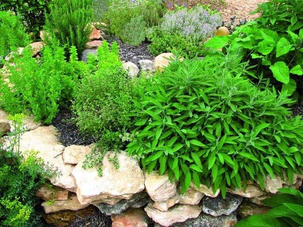 hierbas medicinales, jardín medicinal, plantas medicinales