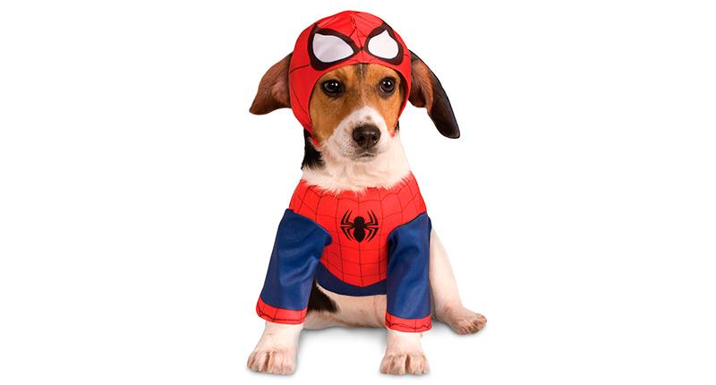 Disfraces de Halloween - Spiderman-perro