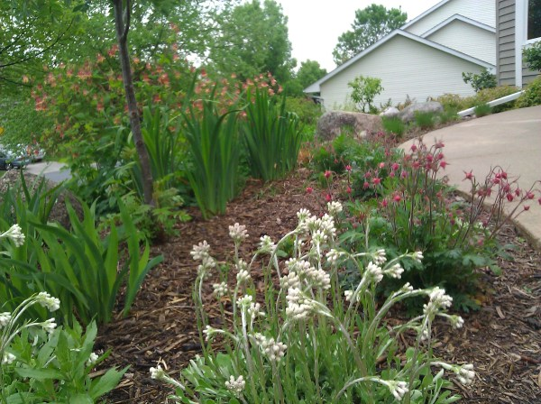 plantings - ecoscapes