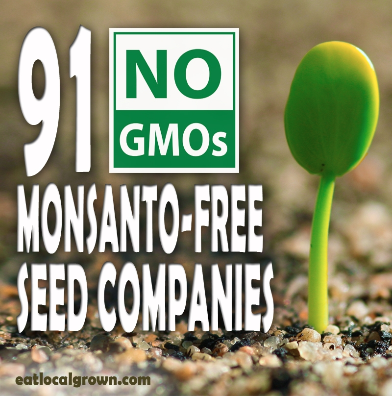 91 No GMO MonsantoFree Seed Companies  Eco Snippets