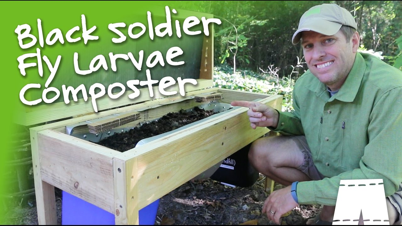 How To Make  Operate A DIY Soldier Fly Larvae Composting Bin  Eco Snippets