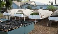 Backyard Aquaponics As A Self-Sustaining Farm In Suburban ...