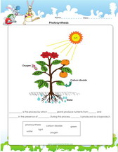 parts of a seed diagram worksheet 12v light switch wiring 1st grade science worksheets for kids pdf