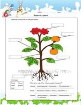 flower parts diagram without labels simple digital voltmeter circuit 2nd grade science worksheets for practice pdf label of a plant worksheet