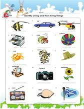 4th grade digestive system diagram dichotomous key science worksheets, pdf printable