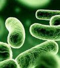 Probióticos y artritis