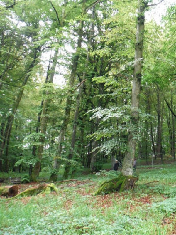 Los enormes beneficios que reporta la gestión forestal