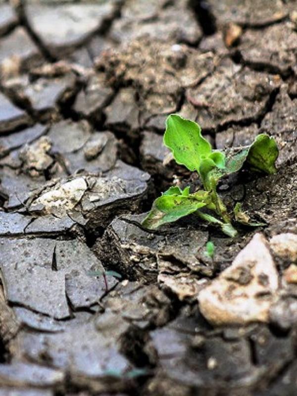 El Cambio Climático ya está pasando factura al Planeta