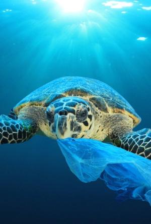 Una cárcel de plástico para los animales marinos
