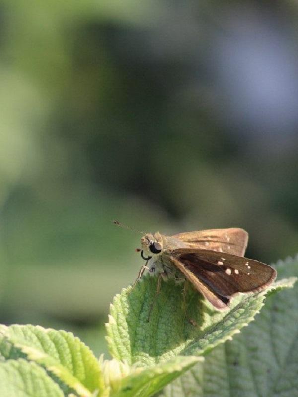 Casi la mitad de las especies de insectos se extinguirán en pocas décadas