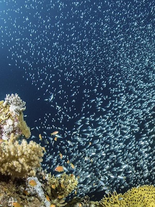 Cinco claves del estado mundial de la pesca que debe conocer