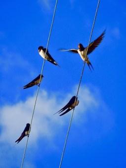 Día Mundial de las Aves Migratorias 2021- ¡Feliz regreso!