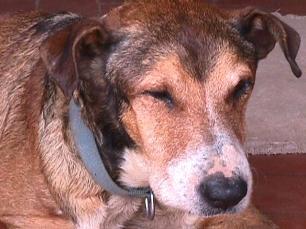 Los ayuntamientos y las protectoras de animales recogen cada día en España alrededor de 400 perros y gatos abandonados.