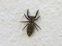 EinmalrundumdieWeltde  Spider Identification Guide