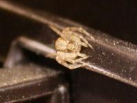 Ecotourismusde  Insekten Wrmer und Spinnentiere in Europa