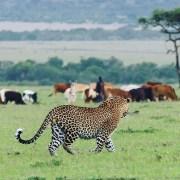Masai-Mara-EcoQuest-EcoTraining-Featured-Image