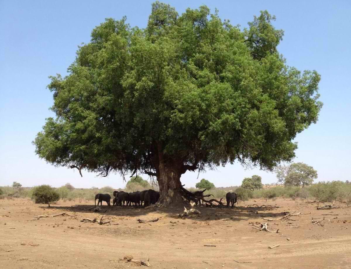 Masatu_Elephants-resting-under-a-tree_Henry-Parsons