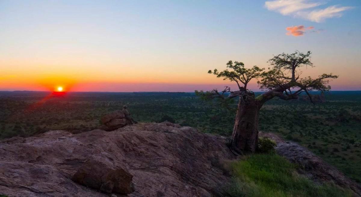 Mashatu_Mamagwe-sunset_Cara-Pring_cropped