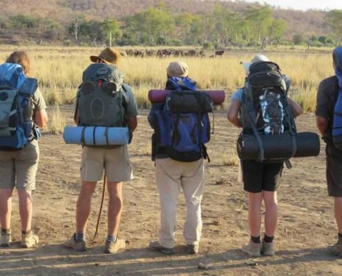 Wilderness-Trails-skills-buffalo-encounter