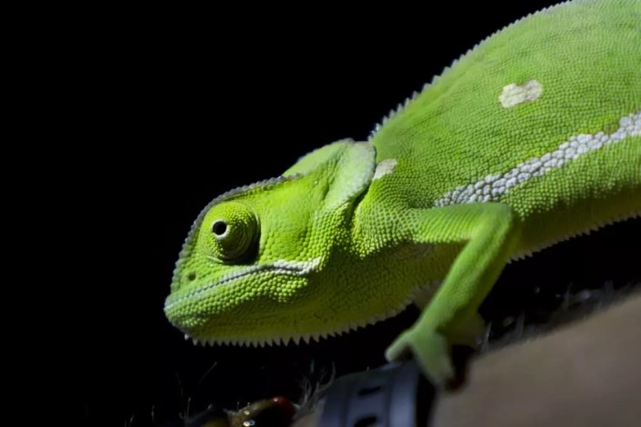 EcoTraining Amphibians and reptiles