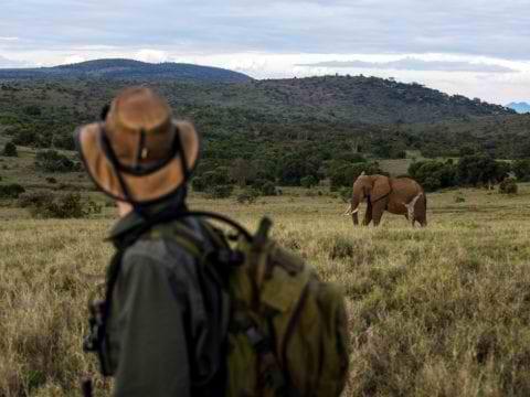 Borana Conservancy Elephant