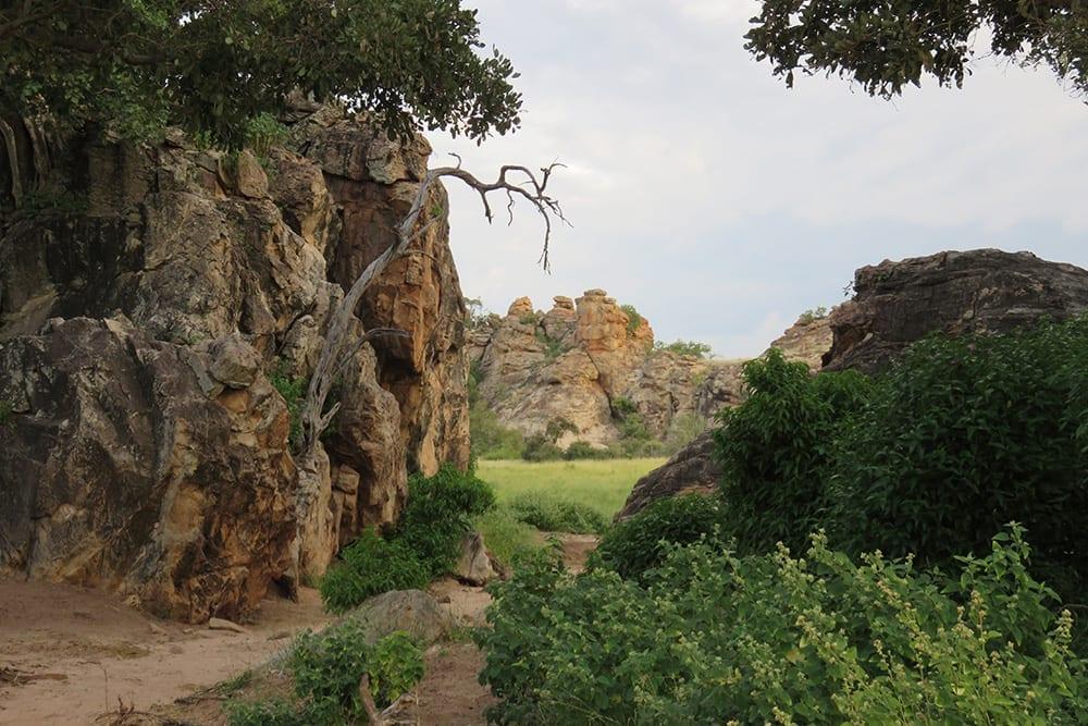 Mashatu Camp Botswana EcoTraining Landscape 3