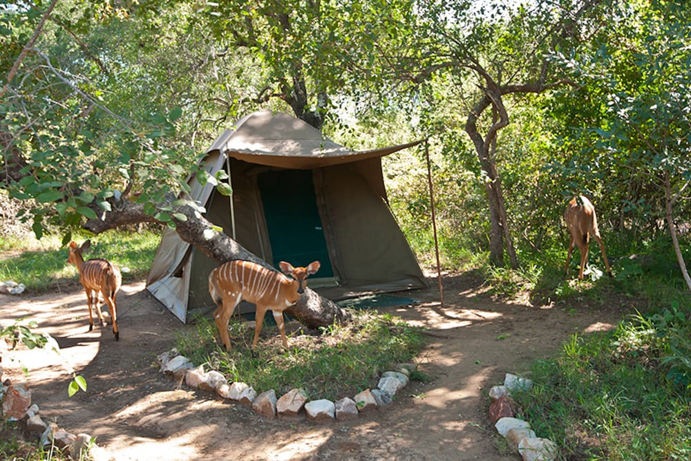 Selati Camp EcoTraining Camp Bush Buck