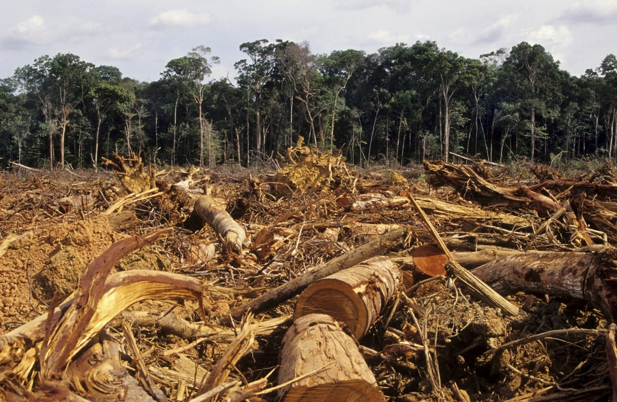 Earth Hour blog - deforestation