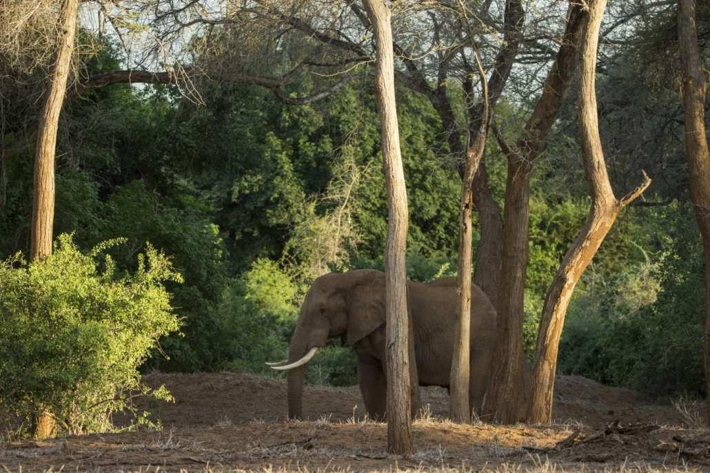 Makuleke elephant