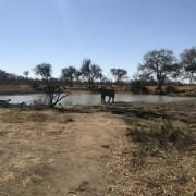 Elephant Safari - Ecotraining - The Botanical Giants of Africa