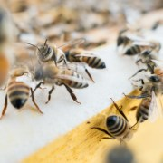 Why Bees are important - Ecotraining