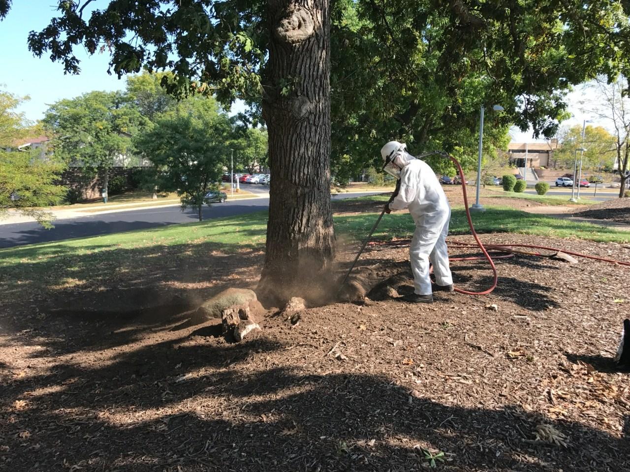 Worker performing root collar excavation