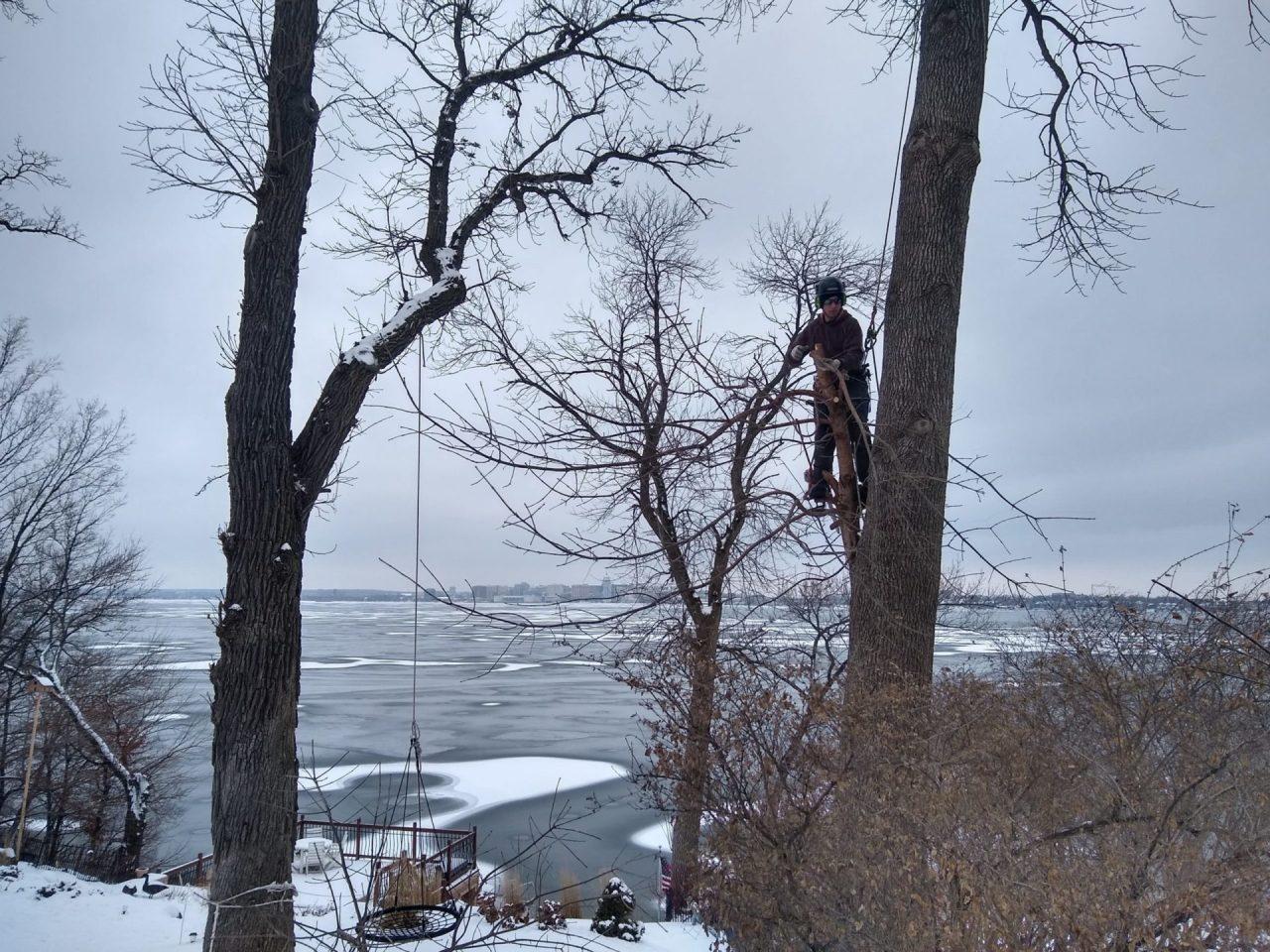 Tree pruning in winter