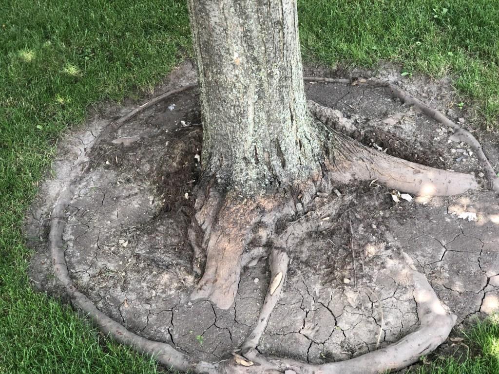 how to put mulch around a tree