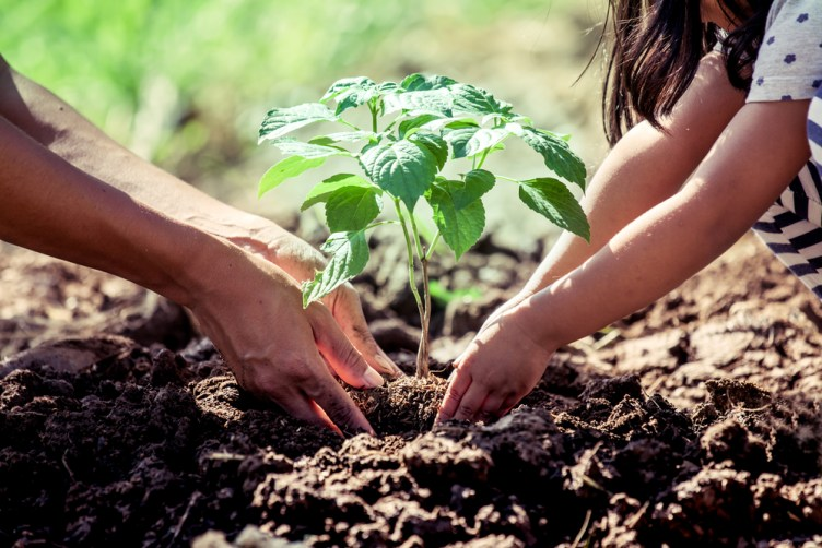 benefits of planting trees
