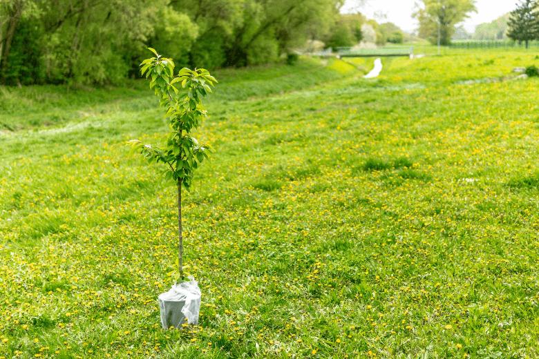 fall tree planting