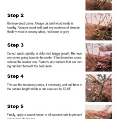 How To Make A Stem And Leaf Diagram Sony Xplod Deck Wiring Prune Roses