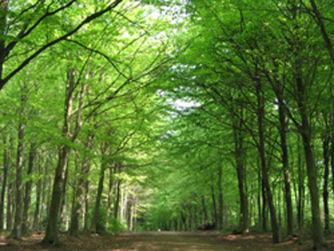 allée forestière
