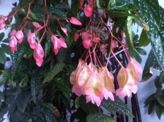 Fleurs de Tamaya