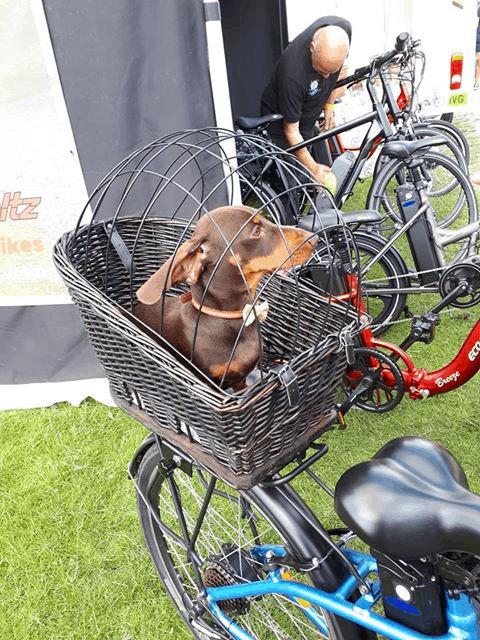eco voltz rear carrier mounted dog basket
