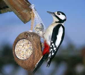 Vogelfutter Selbstgemacht Und Basteln Von Vogelfutter Stellen
