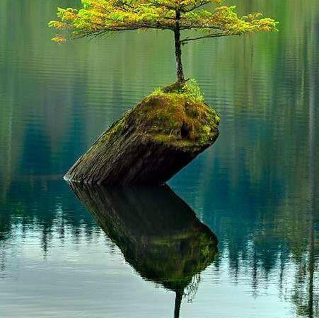 Browse The World S Most Amazing Majestic Trees