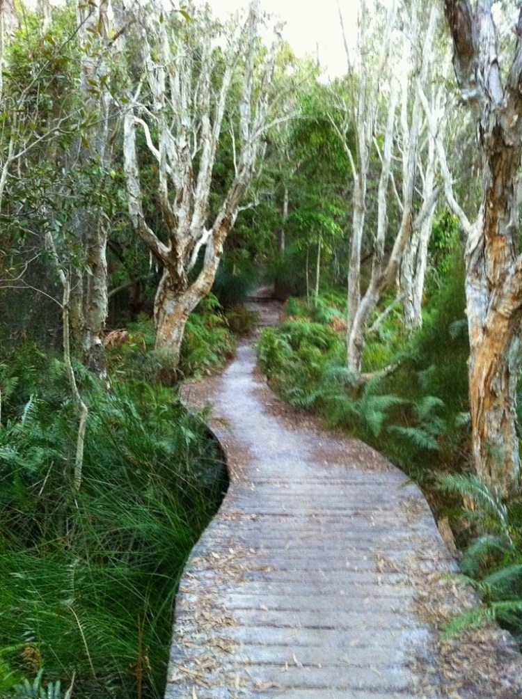 Noosa National Park Queensland Australia Place For